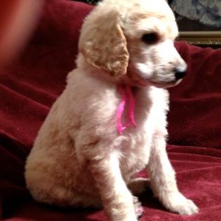 Baxter 4 weeks SOLD