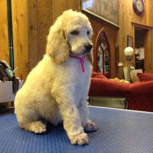 Baxter 6 weeks SOLD