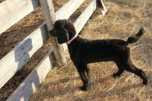 Millie on the ranch in Ne.