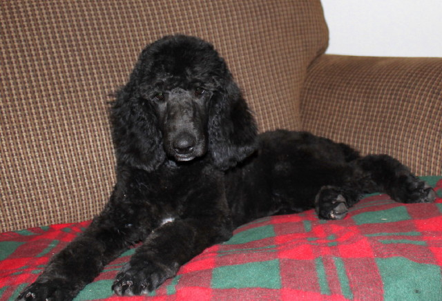 Millie relaxing at home in Ne.