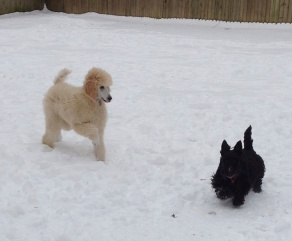 Diamond and Bella( her new sister playing.
