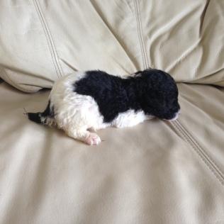 PEANUT at 16 days old.