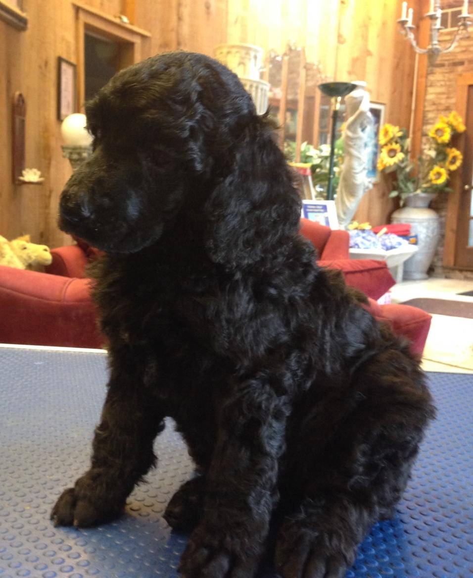 Gus at 5 weeks old.