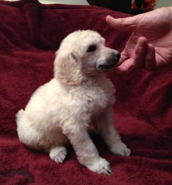 Aspen at 4 Weeks old.