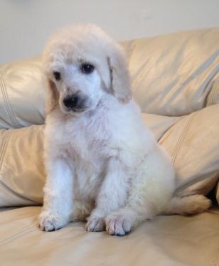 Aspen at 5 weeks old.Aspen is a beautiful, sweet, loving girl.
