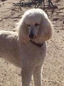 Gus camping in the California desert.
