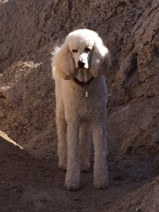 Gus on camping trip in the desert.