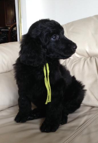 Ramsey at 6 weeks old