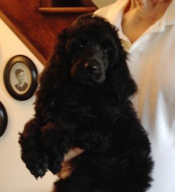 Gus at 6 weeks old.