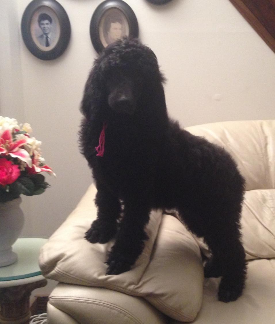 Eden at 9 weeks old.