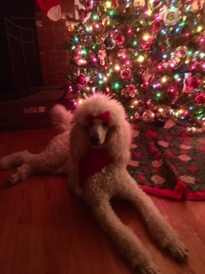 Wynter Christmas December 2015.