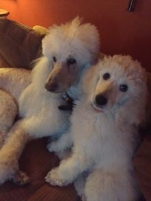 Draper and her big brother Cowie chill-in at home.