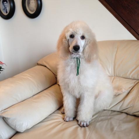 Gigi at 10 weeks old.