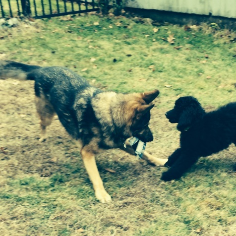 Remy and Cooper having fun.