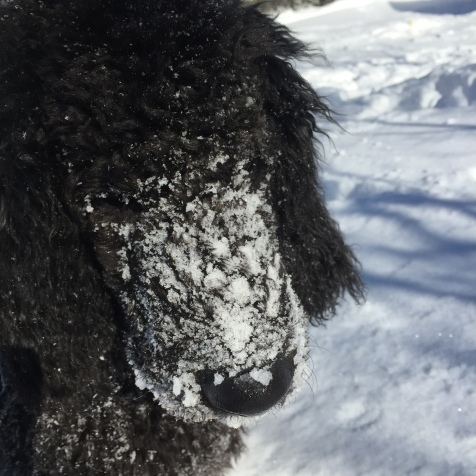 Onyx playing in the snow winter 2014.