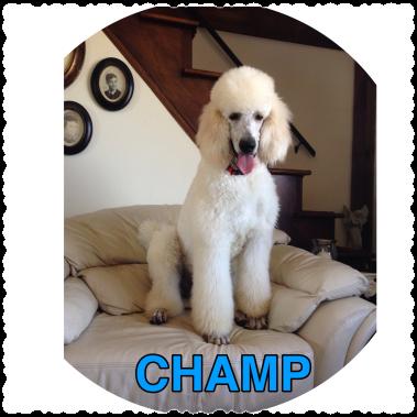 Champ.