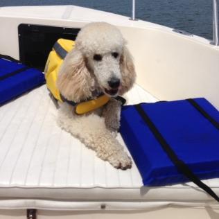 Diamond enjoying a day on the boat.