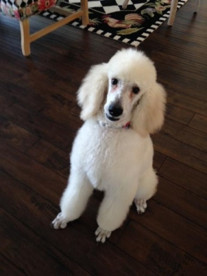 Quinn after her spa day. Jan. 2015.