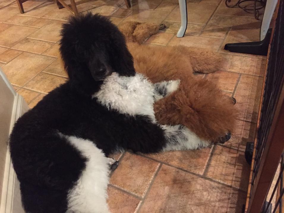 Watson and his sister Charlie.