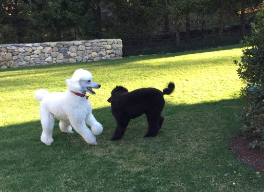 Alex and Gus playing together. March 2016.