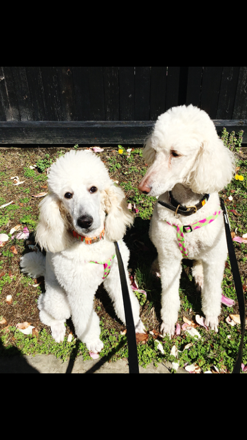Draper and  her brother Cowie April, 2016.