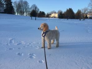 Blazer loves the snow.