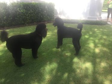 Gus & Remey