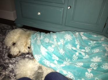 Quinn naping