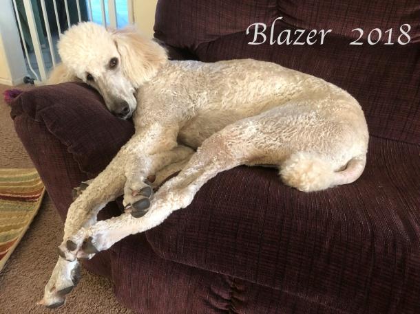 blazer 2018