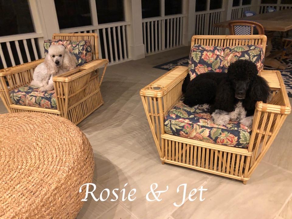 rosie & jet