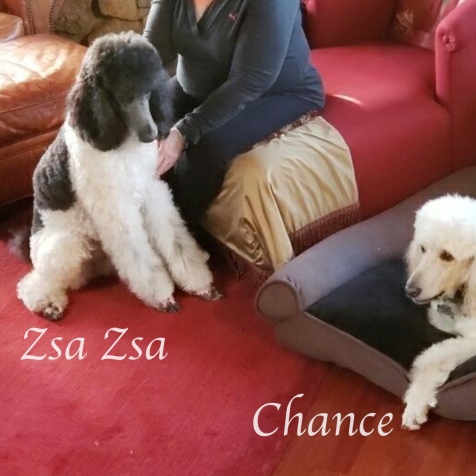 zsa zsa & chance and amy - version 2