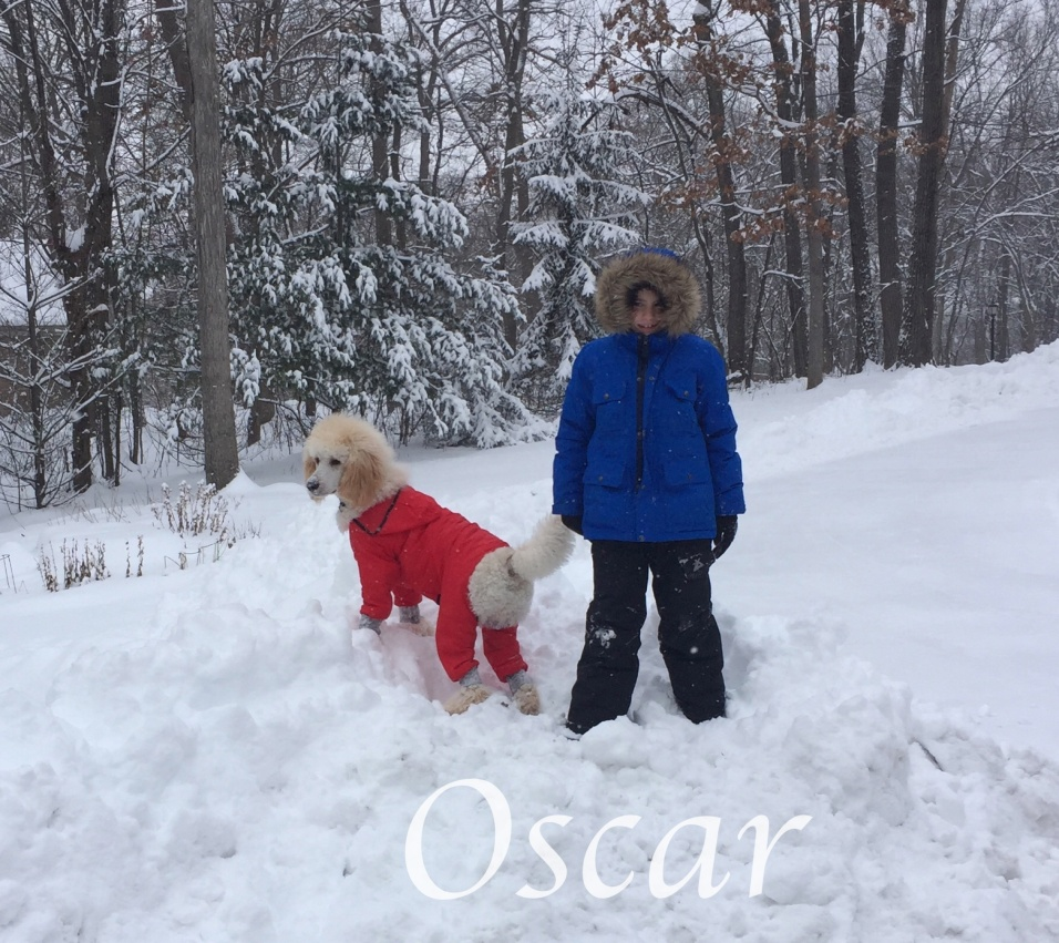 Oscar In the snow