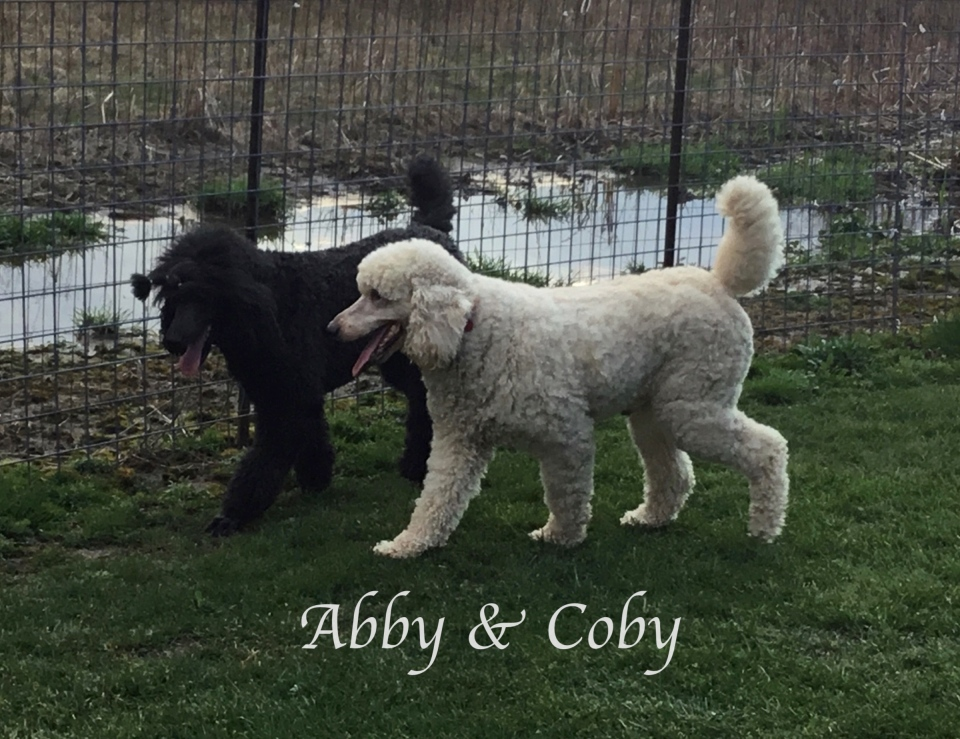 IMG_3612Abby & COBY