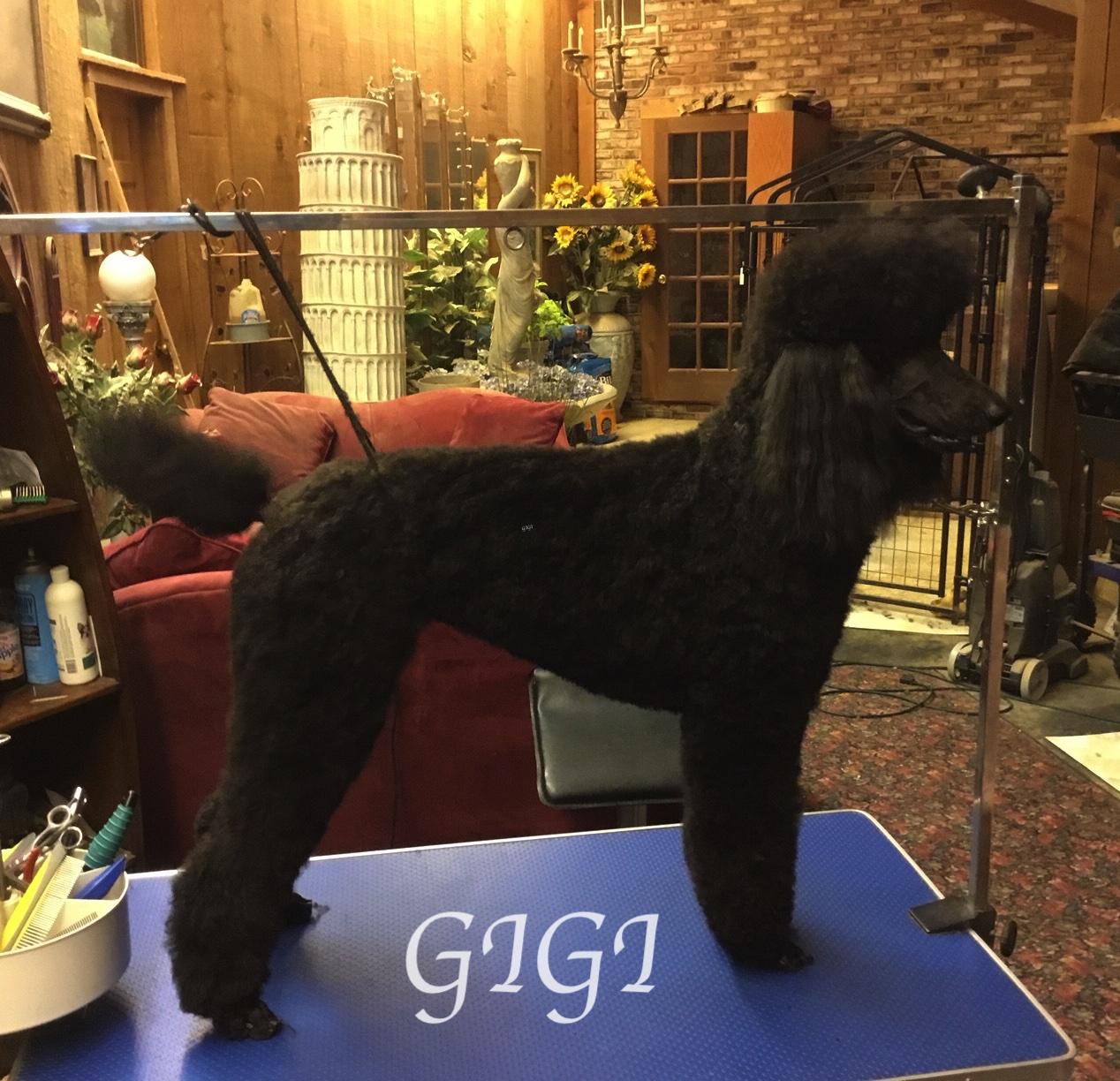 IMG_9490-GiGi - Version 2GIGI