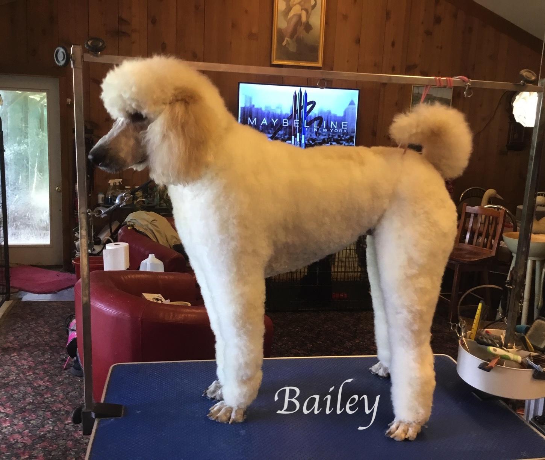 Bailey 2019