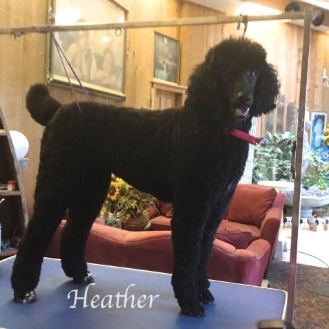 Heather Oct. 2019