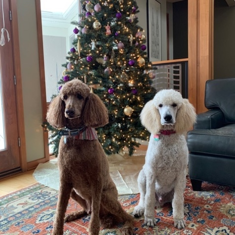 Matteo & Ziggy Christmas 2019.