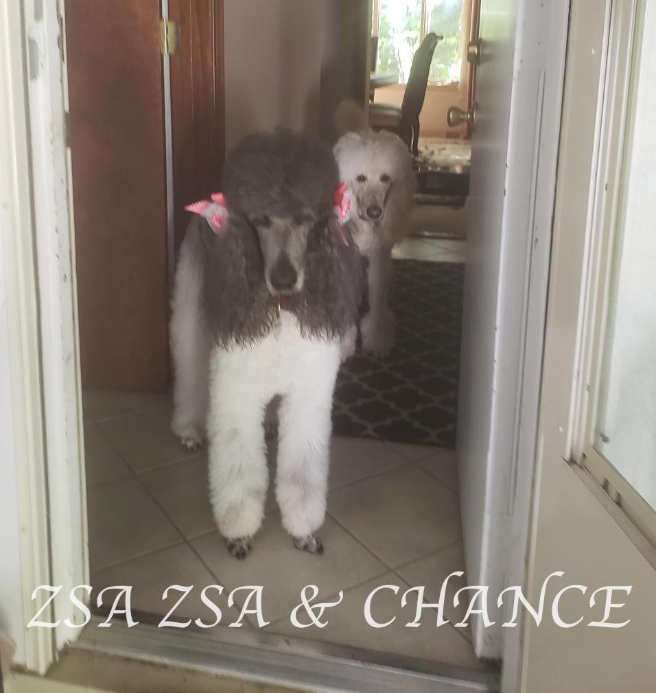 20200904_102932ZSA ZSA & CHANCE AUG.