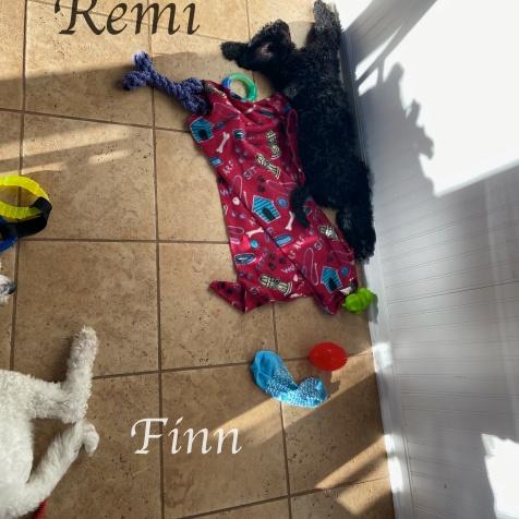 image0REMI & Finn_001