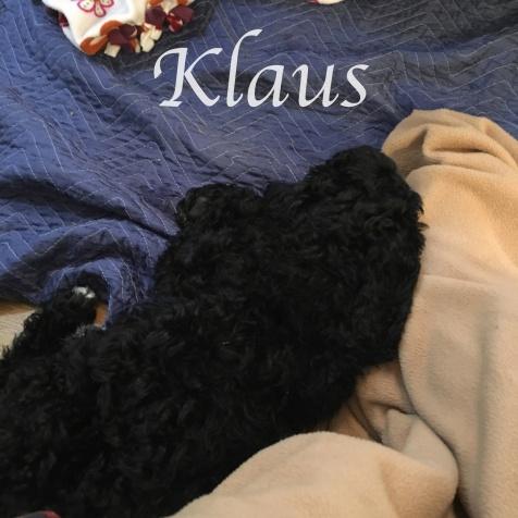 Klaus 5