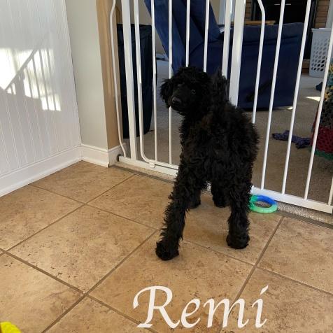 Remi 5