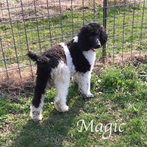 IMG_6237Magic March 29