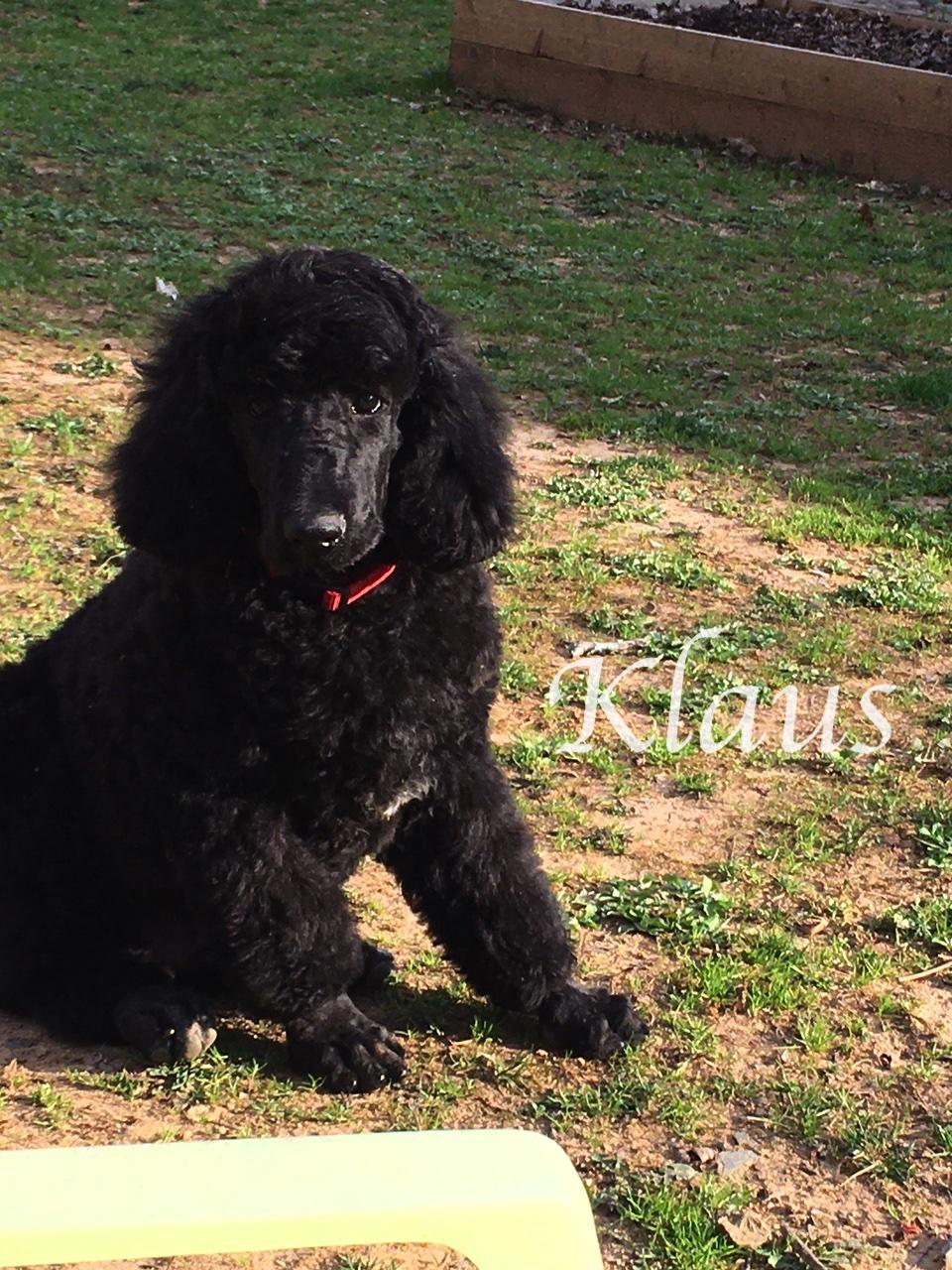 Klaus ssitting outside