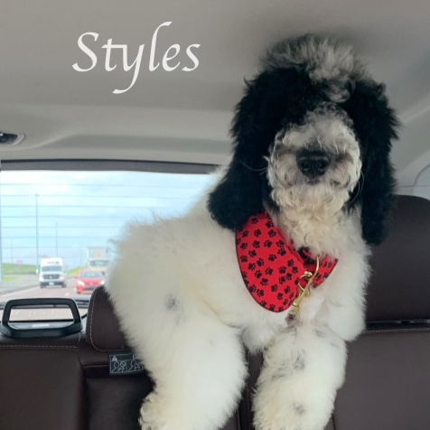 Styles in car