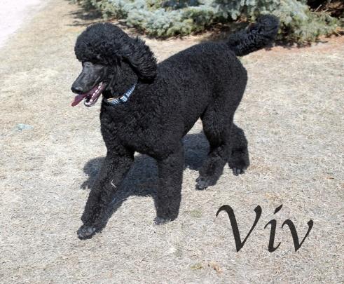 Viv & Left front