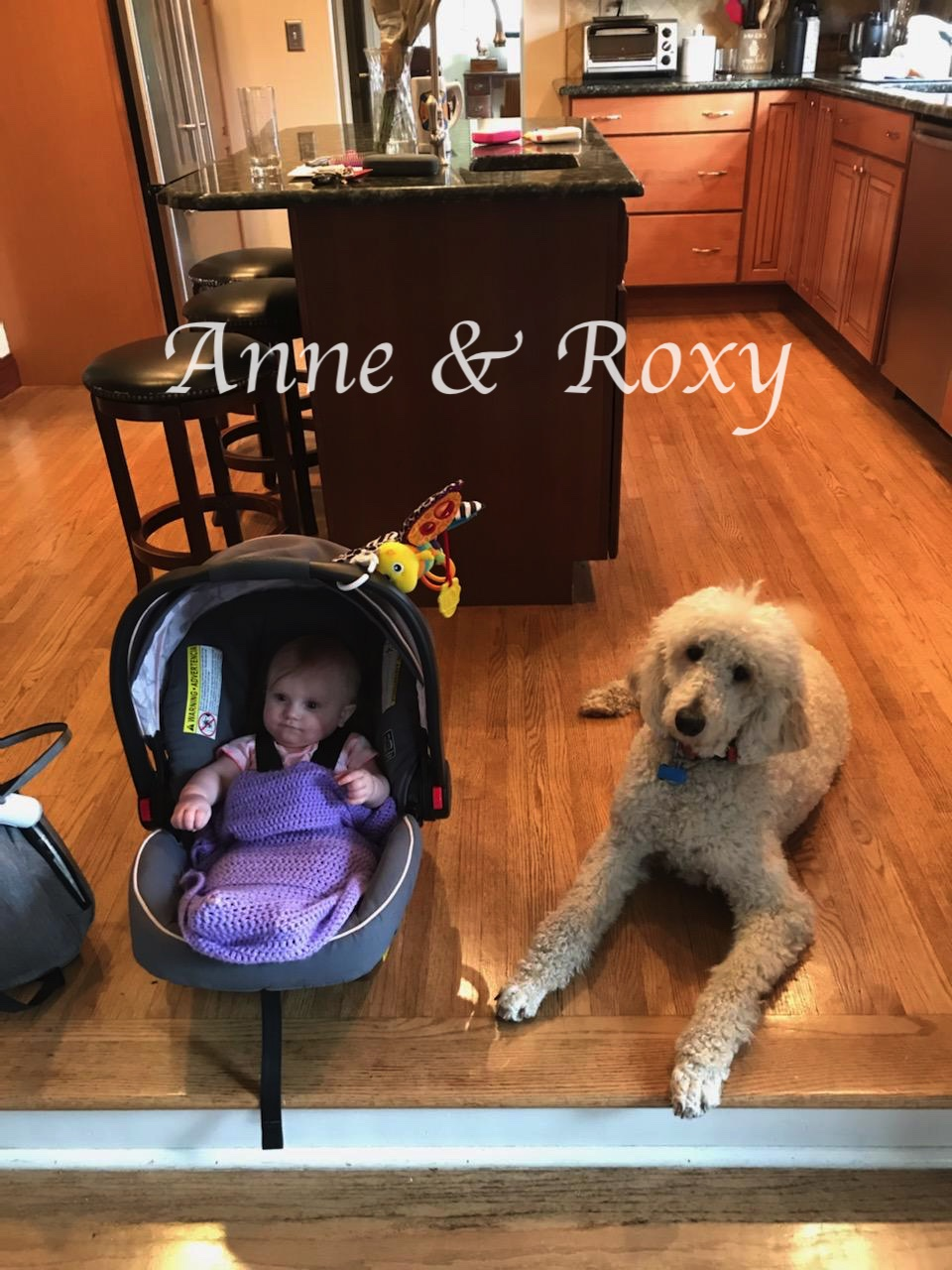 Anne & Roxy Kitchem