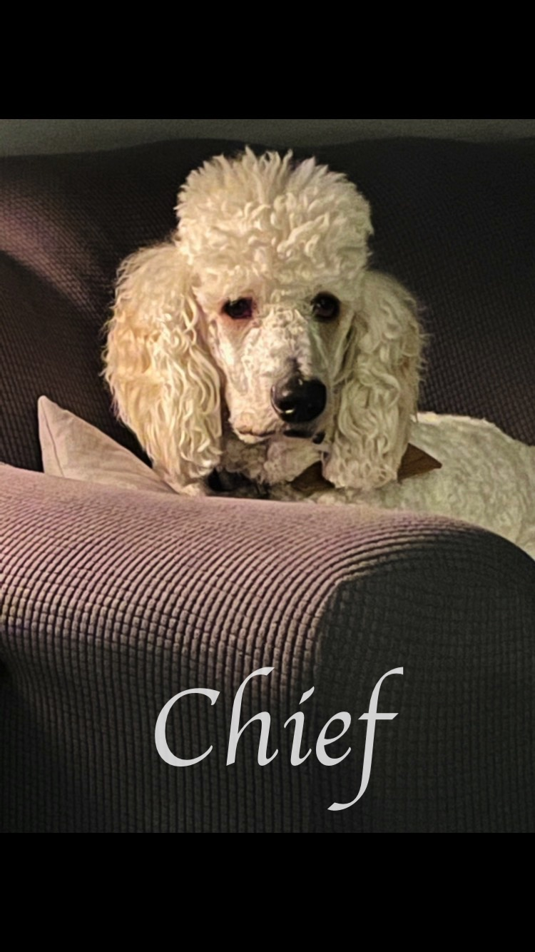Chief on Couch