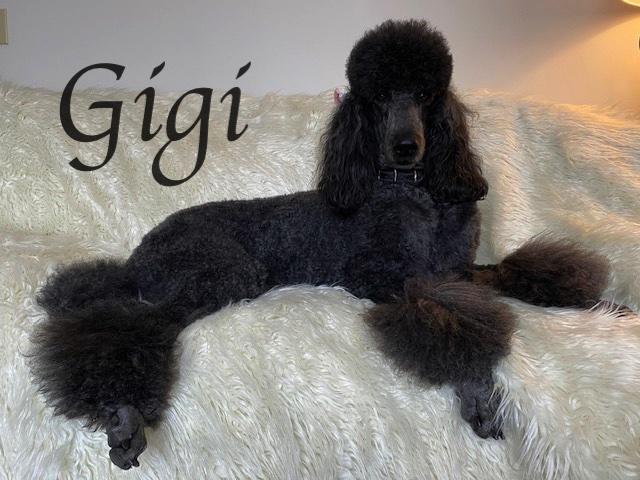 IMG_3701Gigi Ft Fur