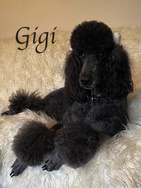 IMG_3872Gigi couch