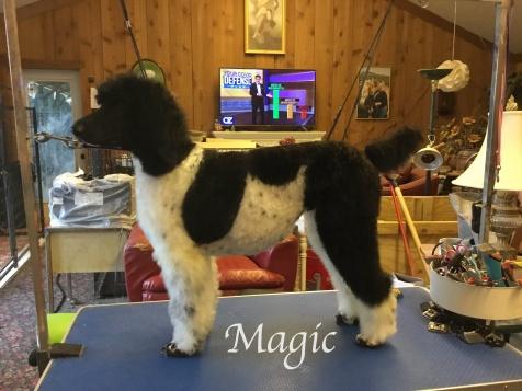 IMG_6465Magic grooming table